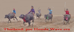 buffalo racing in Thailand