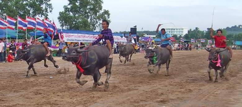 Pattaya buffalo races at Mabprachan Lake.