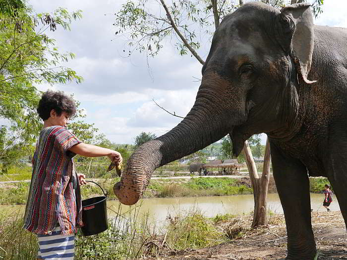 Elephant Jungle Sanctuary, Pattaya Thailand